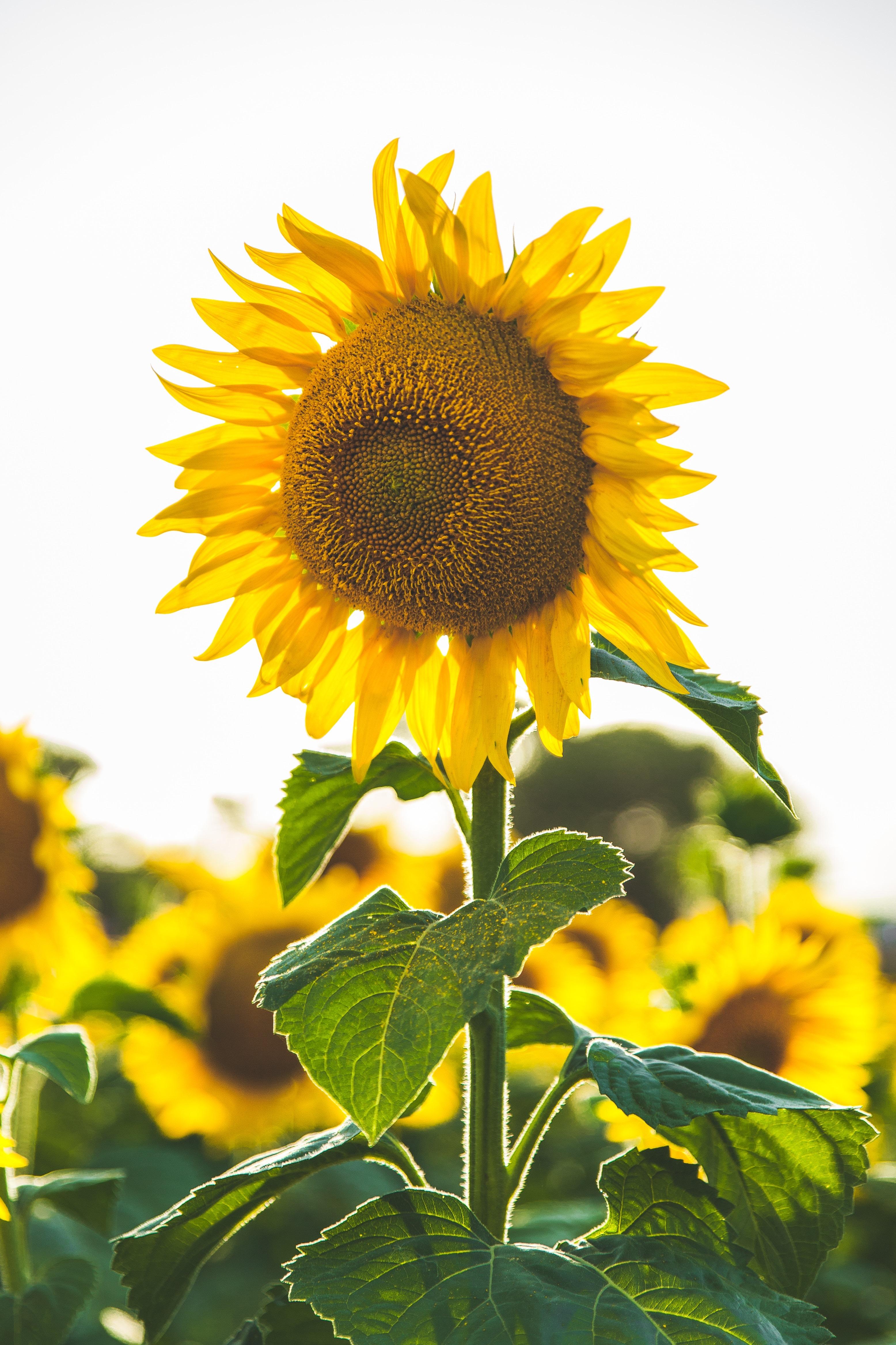 Sonneblume - Heimat & Herz Einrichtung für psychisch erkrankte Menschen